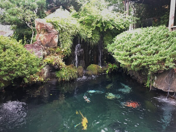 吉田観賞魚の池画像